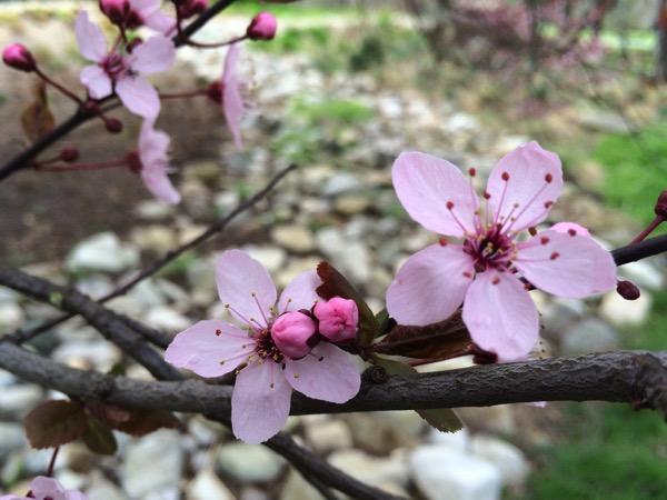Kurpark Oberlaa Flowers