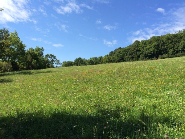 A meadow on Cobenzl